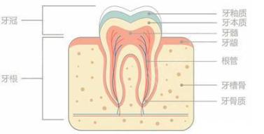 牙齿矫正后会松动北京拜尔昊城口腔医院牙齿矫正容易反弹